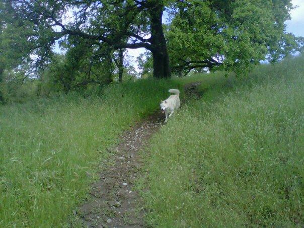 dogwalk