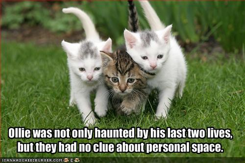 funny-pictures-cats-past-two-lives-have-no-clue-about-personal-space