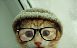 hipster+cat