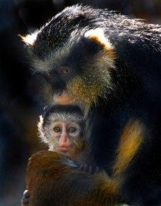 New Babies Sacramento Zoo