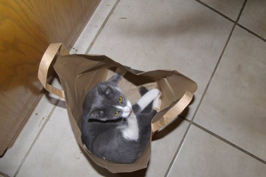 He does stupid things like sit in the bottom of bags.