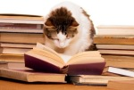 cat reads the classics