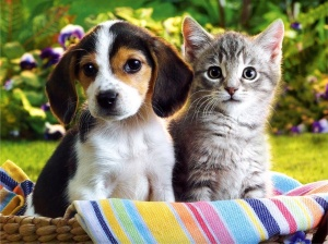cute-puppies-and-kittens-cute-puppies-and-kittens-wallpapers-dogjing-dot-com