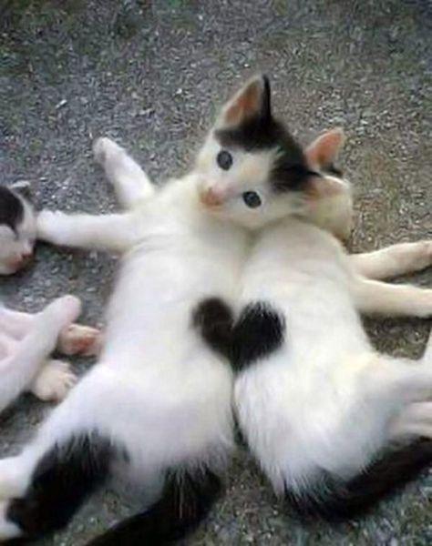 heart-kittens