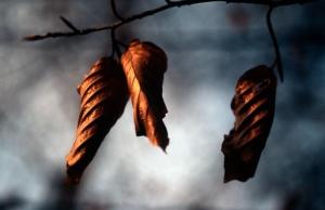 vm_leaves on tree