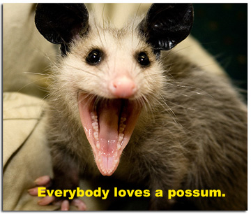 everybodylovesapossum