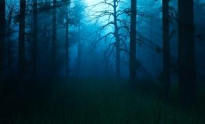 vm night woods blue