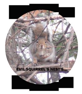 sqturday squirrel logo