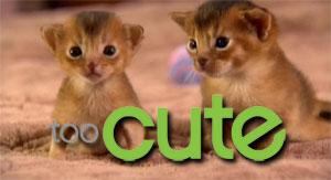 Too-Cute-2_6864