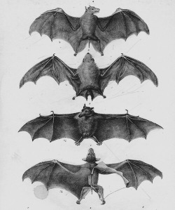 victoiran bats
