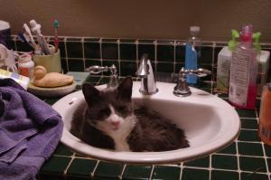 oscar in sink