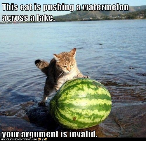 funny_cat_pictures_lolcats_this_cat_is_pushing-s500x485-301701