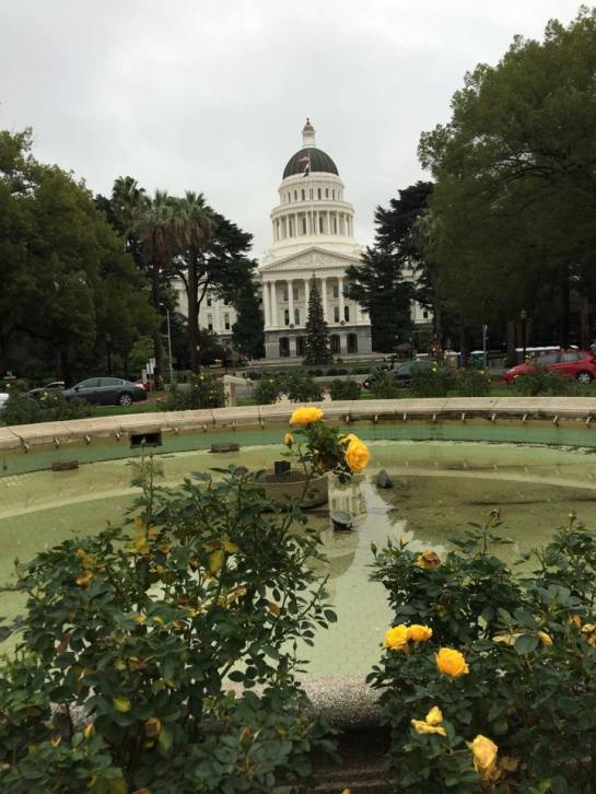 Christmas Roses at the California State Capitol
