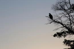 The Eagle Cried