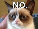 Grumpy-Cat-NO-1