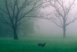 Bruning Question #12: WoodlandCreatures