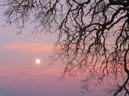 Moon Rise Walk, Orangevale, CA