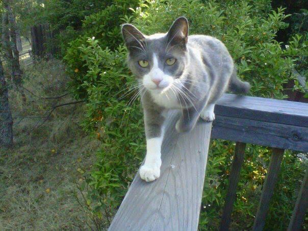 oscar-the-cat
