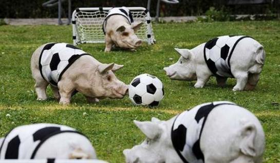 funny-animals-playing-soccer-football-001