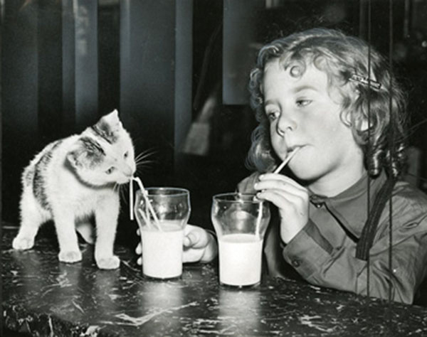 girl-and-kitten-drinking-from-straws