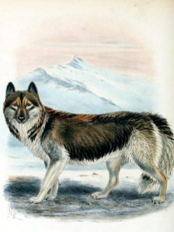domesticated-dog-19th-century
