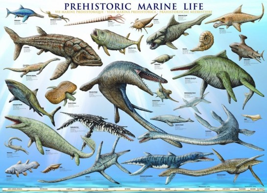 sea-life-poster-800x579