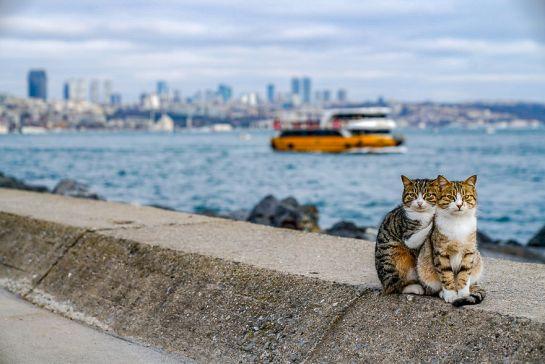 Istanbul-Kitties-11-5ca75177a3202__880