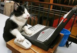 Cat-Writing-1